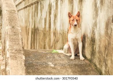 Thai dog sitting on the cement bridge