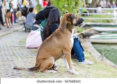 Thai dog sitting  in park