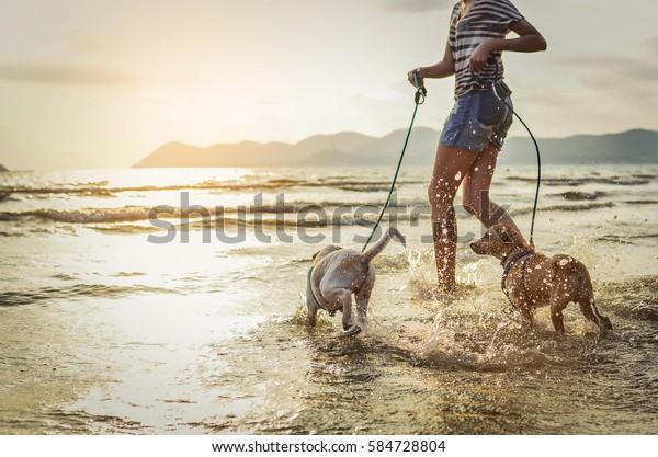 cani thai divertono a giocare sulla spiaggia con il proprietario