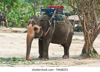 Thai Elephant - Shutterstock ID 74468251