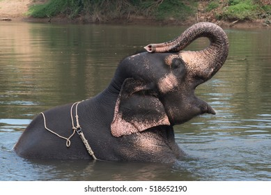Thai Elephant bathing and relaxing in the river
