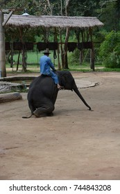 Thai elephant and Mahout