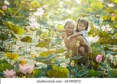 Thai Farmer and Children grow Lotus in the season. Lotus were soaked with water and mud to be prepared for harvest.