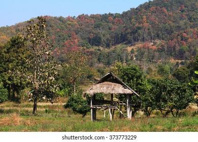 Thai farmer cottage
