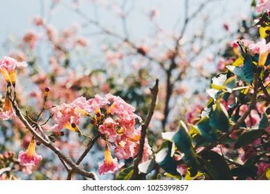 A Thai Flower