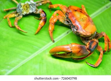 Thai food, Frield grilled crab on banan leaf.