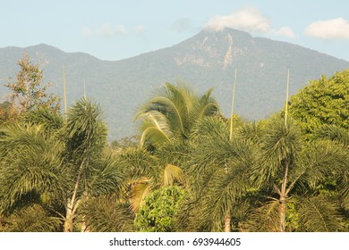 Thai forest outback landscape. Forested hills and meadows