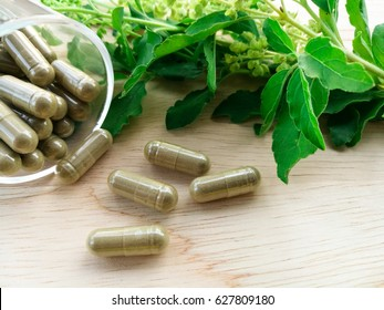 Thai herbal capsule made of holy basil leaves,the benefit to help expel intestinal gas; aid digestion and enhance appetite.In  glass and on wood background with holy basil leaves beside.