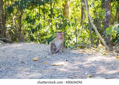 Thai monkey in public park