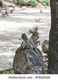 Thai monkeys in public park
