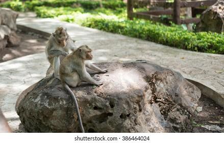 Thai monkeys in public park, selective focus point