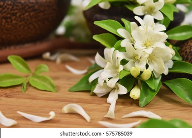 Thai Orange Jasmine