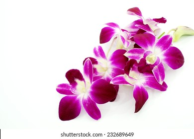 Thai Orchid flowers