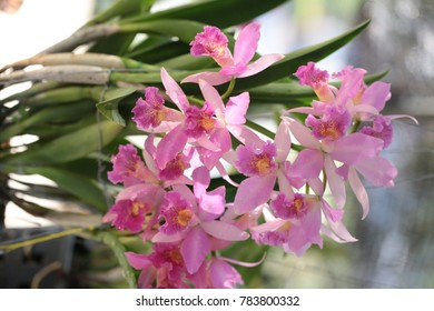 Thai orchid flowers mixed. Colorful variety