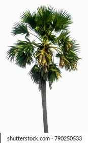 Thai palm isolated with white background