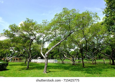 Thai people like to relax and exercise in the morning and evening at Chatuchak or Juktujhak or JJ Park, north of Bangkok. They can also learn species of several trees.