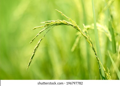 Thai rice exporters, is one of the world