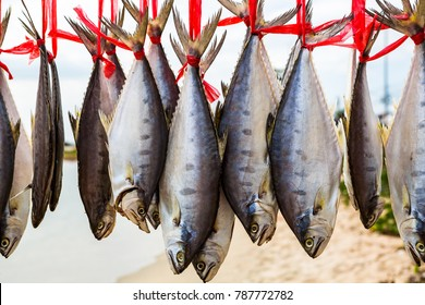 Thai salted fish hanging up to dry on the beach / Food preservation, salted fish is fish cured with dry salt and thus preserved for later eating.