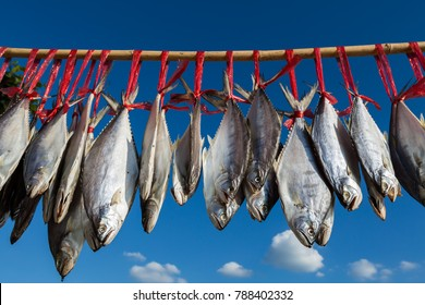Thai salted fish hanging up to dry on the beach with blue sky background / Food preservation, salted fish is fish cured with dry salt and thus preserved for later eating.