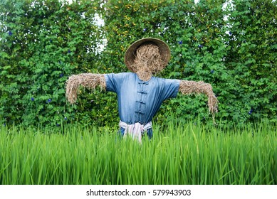 Thai scarecrow in the rice field