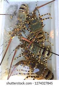 Thai sea Lobster