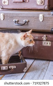 Thai white with red marks cat with blue eyes sits inside vintage suitcases on a pink background toned picture close-up shallow depth of field