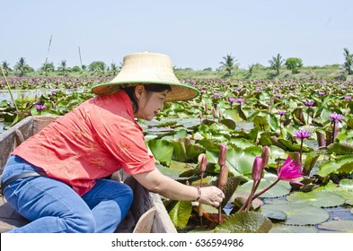 Thai woman watching red water lily.