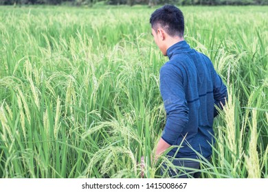 Thai young farmer stand in rice paddy for inspecting and collecting data to study and develop his farm to improved productivity in the future.