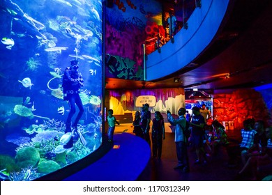 Thailand, Bangkok - August 30, 2018:  Sea Life Bangkok Ocean World Aquarium in the shopping center of SiamParagon