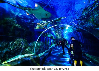 Thailand, Bangkok - August 30, 2018: Sea Life Bangkok Ocean World Aquarium in the shopping center of Siam Paragon