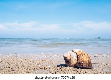 Thailand beach travle background concept - Single shell on the beach, shell on the sand at Huahin Thailand
