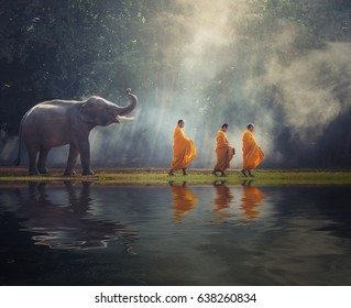 Thailand Buddhist monks walk collecting alms with elephant is traditional of religion Buddhism on faith Thai people, Thailand ASIA