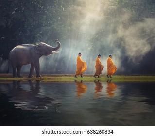 Thailändische buddhistische Mönche wandern zusammen mit Elefanten Almen sammeln ist Tradition des religiösen Buddhismus auf dem Glauben thailändisches Volk, Thailand ASIA
