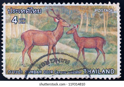 THAILAND - CIRCA 1976: a stamp printed by Thailand, shows Sambar deer cervus unicolor, circa 1976