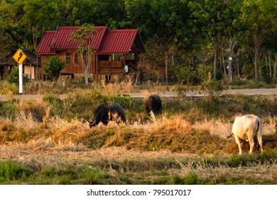 Thailand country farm house
