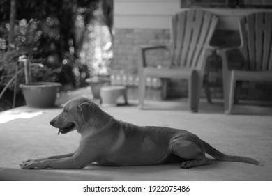 Thailand dog cute blackandwhite pet