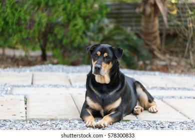 Thailand dog healthy emotions