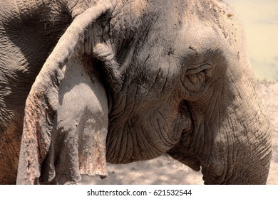 Thailand elephant that look like feel so sad.