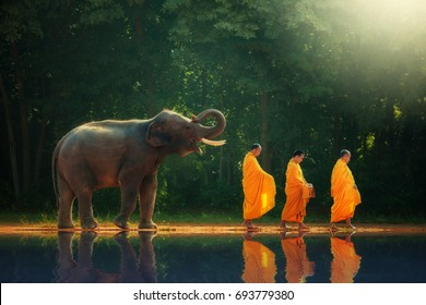 Thailand elephant walk behind monks or priests as a reflection of the shadow.