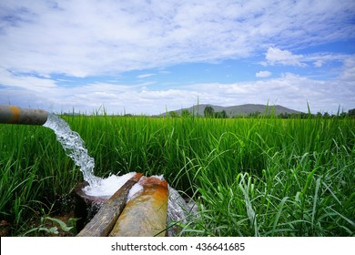 In Thailand, farmers are pumping water into the fields