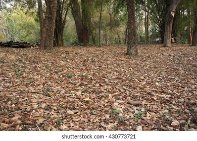 Thailand forest in dry season with full of dry leaf on ground