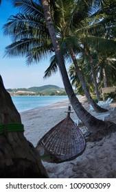 Thailand, Koh Samui (Samui Island), coconut palm trees on the beach