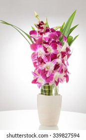Thailand orchid, Purple color isolated on white background with free space at right side for designer / Vintage style