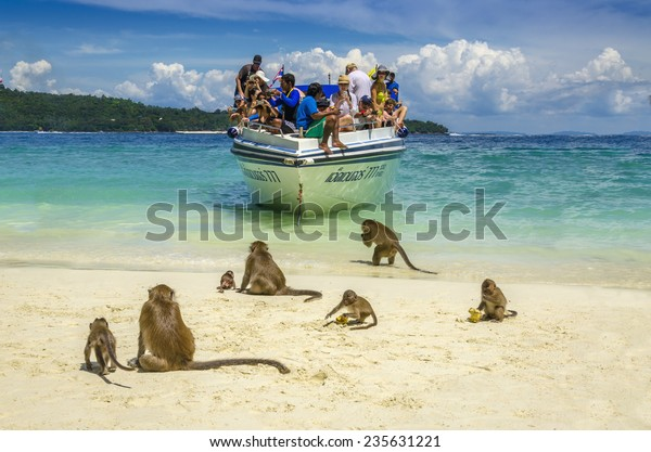 THAILAND, PHI PHI ISLANDS - NOVEMBER 1, 2014: Koh Phi Phi, Monkey Beach, where monkeys waiting for tourists and food from them, top attraction of Phi Phi Islands, Monkey Bay (Ao Ling), Thailand
