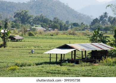 Thailand rural vegetable garden