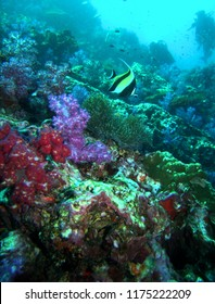Thailand unser water coral Reef