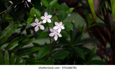 Thailand Wildflower wildlife beautiful nature whiteflower