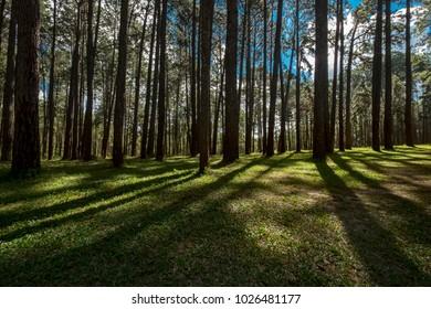 thailand wood park