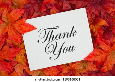 Thank you message, Some fall leaves and a embossed white greeting card with text Thank You