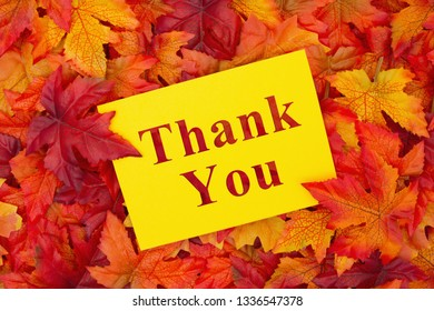 Thank You message, Some fall leaves with a yellow greeting card with text Thank You